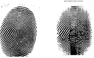 Original fingerprint image (left panels) and compression to rank 10.