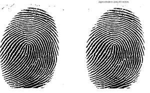 Original fingerprint image (left panel) and compression to rank 40 (from website of John Burkardt, FSU).