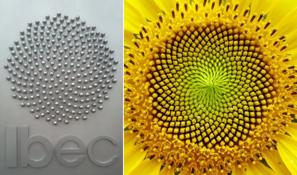 Sunflowers and Fibonacci: Models of Efficiency (1/6)